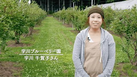 旅育(タビイク)ブルーベリー収穫体験編